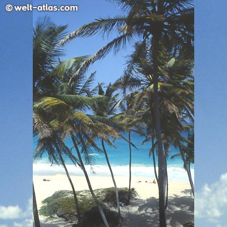 Bottom Bay, Barbados - eine der schönsten Buchten der Insel, mit Schatten. Starke Strömung und Brandung
