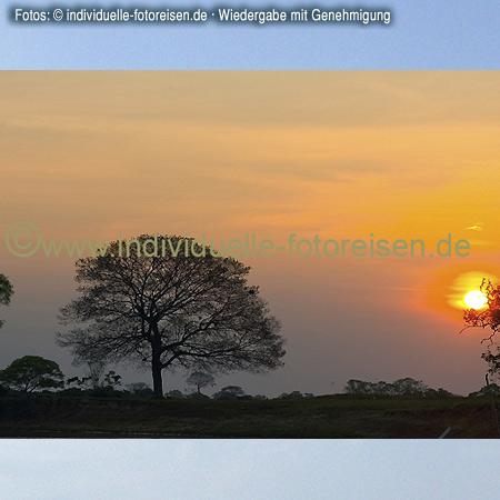 Landschaft im Pantanal