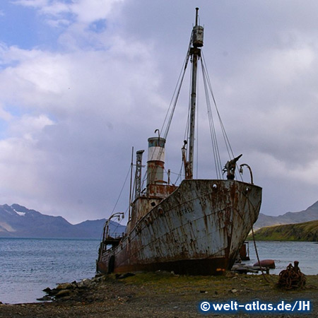 Shipwreck, Grytviken Harbour, South Georgia